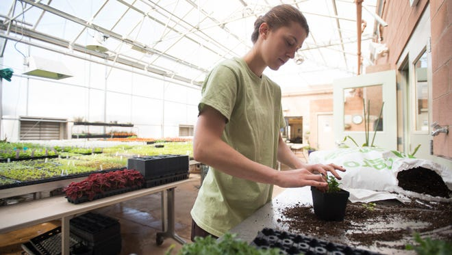 Jenna Thinnes, a volunteer with the Gardens on Spring Creek, works in the greenhouse Wednesday. People that live near the gardens have complained after the location planned to add an amphitheater to an open field.