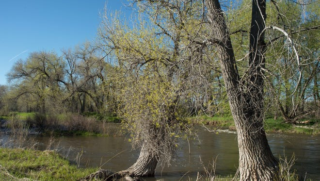 The Cache la Poudre River flows through Arapahoe Bend Natural Area in Fort Collins Tuesday, May 3. The third-annual Poudre RiverFest is set for June 4.