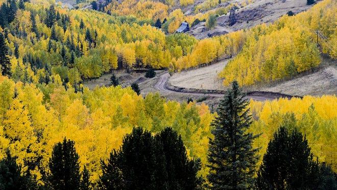 Aspens near Cripple Creek reach their golden peak last September. Erin Hull/Coloradoan library