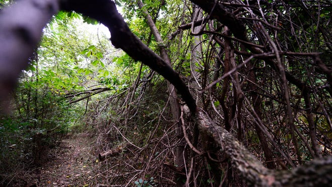 Vines and branches wind along part of this hiking, giving it the feel of a secret garden.