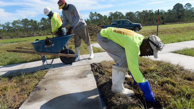 """Randy Bishop, with West Construction, replaces sod between the shooting platforms on the new skeet and trap shooting range Thursday, Sept. 29, 2016 at the Indian River County Public Shooting Range. The range is currently upgrading their shotgun facilities that will feature three trap and skeet ranges and two sporting clay courses. """"For us, we're looking at this as being a real opportunity for the northern part of our county to get events and bring things in,"""" said Holden Kriss, range manager. """"I also think this is going to be so big that we might even get a hotel in the area.""""CQ: Randy Bishop, Holden Kriss"""