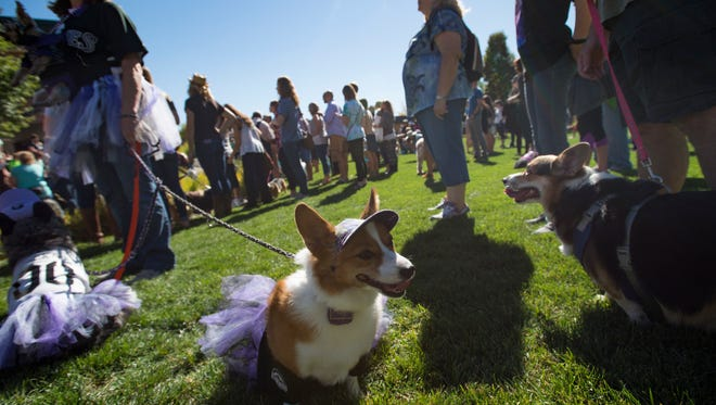 Corgis and corgi lovers gather in Civic Center Park for Tour de Corgi Saturday, October 1, 2016. The gathering of stubby-legged dogs, in its second year, paraded through Old Town.