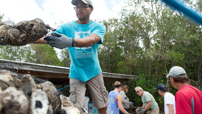 "Florida Oceanographic Society staff and volunteers staged 326 bags of oysters to be deployed into the Indian River Lagoon from the Driftwood Motel in Jensen Beach on Thursday, Nov. 3, 2016. The motel is one of four locations along the river where FOS creates or adds to existing oyster reefs to help clean the water. ""We knew it was a good area for oysters. We've been using this site a few times as an outdoor classroom. We finally had the time and funding to permit this site,"" Dr. Encomio said. For more information about volunteer opportunities at FOS, contact Rosemary Badger at 772-225-0505, ext 109."