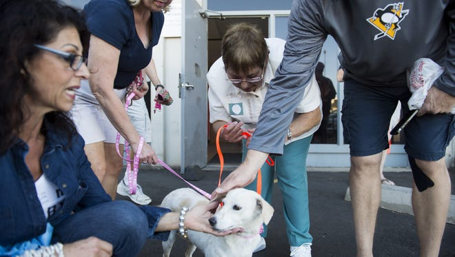 Bridget, a yellow lab mix, gets a lot of love Nov. 25, 2016, at Sky Harbor International Airport in Phoenix. She and another dog rescued from the dog-meat trade arrived in Arizona after flying in from Thailand.