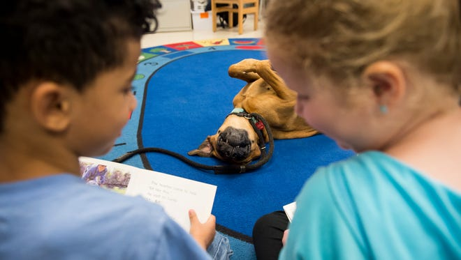 Ozzie, a 3-year-old therapy dog, sits patiently as Park Hills Elementary School kindergarten students read books to him on Tuesday, Feb. 28, 2017. Through Precious Paws Therapy Dogs, a Hanover nonprofit started in 2014, Ozzie regularly visits schools, nursing homes, librariesand hospitals in the area.