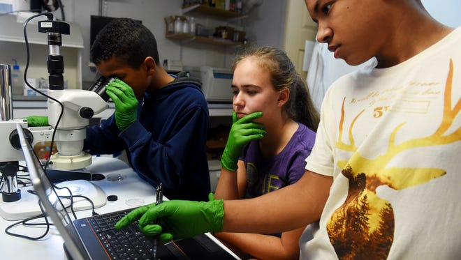 "Timmy Prince, 13, looks through the new stereo zoom microscope with 80-LED light and digital camera with fellow homeschool students Gillian Falls, 14, and David Prince, 14,  on Thursday, Jan. 25, 2018, at the Ocean Research & Conservation Association in Fort Pierce. The organization received funding for the $1,500 microscope through TCPalm's ""12 Days of Christmas"" project. ""We will be using the microscope to look at fecal coliform colonies in the Indian River Lagoon,"" said Bridget Gerovac, a research assistant with the organization. Levels of fecal contamination, as measured by amounts of enteric bacteria in the water, can't be monitored by Kilroys, the remote-controlled water quality sensors ORCA has spread through the lagoon."