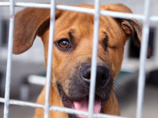 Peewees is a no-kill pet shelter that is one of several local agencies that will be impacted by monies donated during the Coastal Bend Day of Giving. Any money donated to Peewees goes to operating expenses needed to keep the doors open.