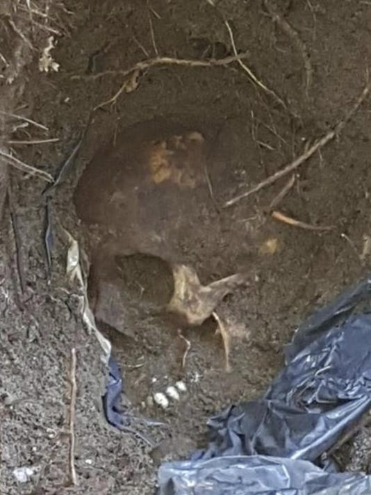 Mexico Mass Graves (2)