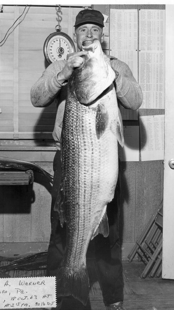 James A. Warner holds up his 48-pound striper caught