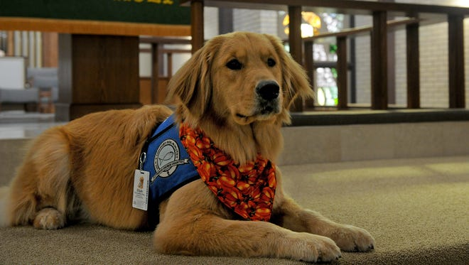 In this file photo, Elijah is a trained Lutheran Church Charities K9 Comfort Dog at Our Redeemer Lutheran Church. Comfort Dog Team meeting will be June 13 6:30 p.m.