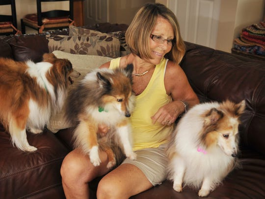 Shelties at the home of Barbara Davis, founder of Mid-Florida Sheltie Rescue.
