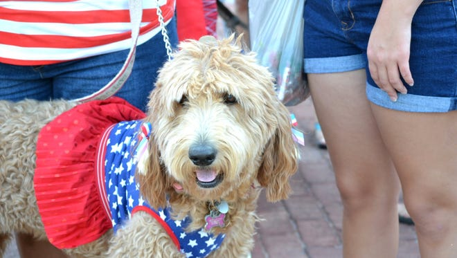 Furry patriots took part in the  annual Kell House Fourth of July parade and festivities. Mabel McGillis joined her military family in the fun.
