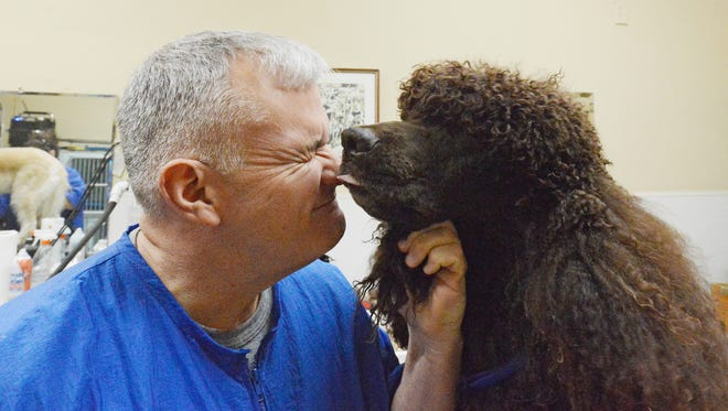 Montclair's Greg Siner has won the Best of Breed this week for the 22nd time in the last 32 years he's been competing in the Westminster Kennel Club Dog Show in NYC.  This year at Westminster, Siner showed his Irish water spaniel, Lake, 5, winning Fourth Place in the Sporting Group, and Best of Breed. Siner is with Lake in his shop on North Fullerton Avenue on Thursday, Feb. 16.