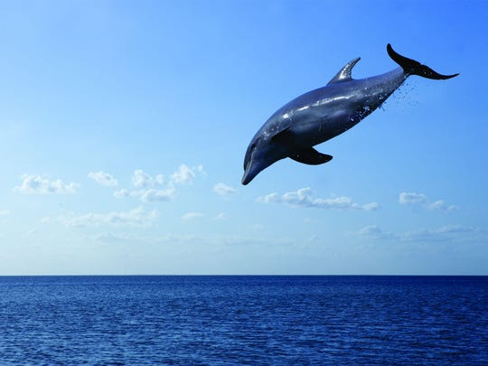 Dolphin sightings are common off the coast of South