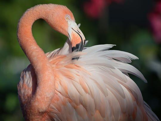 """Birds of the Everglades,"" a new exhibit at the Wonder"