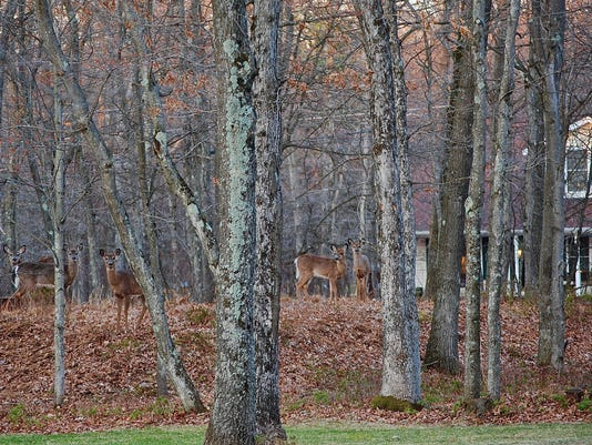 1-LBN-SUB-112215-Deer-woods.jpg
