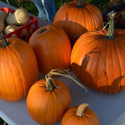 Pumpkin photo 2