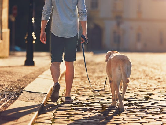 Walking a dog is a good reason to get off the couch,