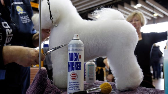 USP NEWS: WESTMINSTER KENNEL CLUB DOG SHOW S OTH USA NY