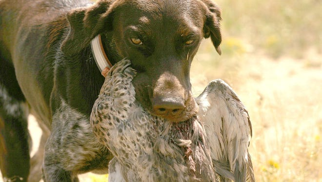 Chukar hunting can be a challenge in Oregon, and it helps to have a good dog.