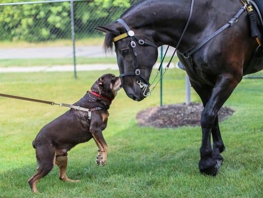 636331430088108126-animalcruelty-3.jpg