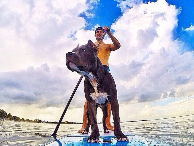 A man and his best friend embrace the waves on a paddle board.