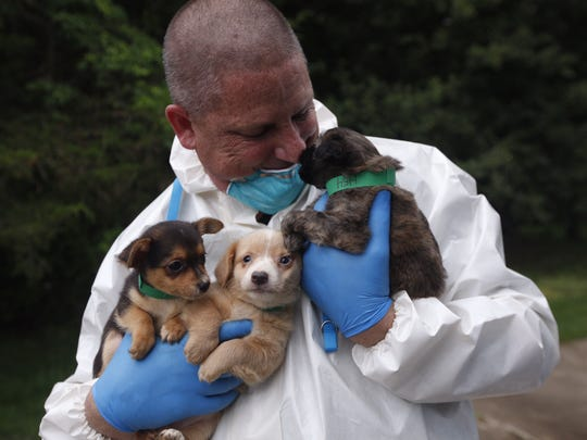 Workers treat some of the more than 100 dogs discovered