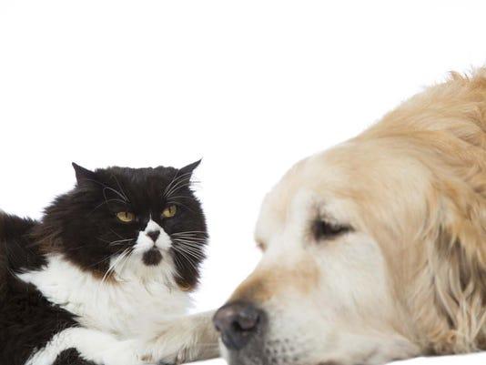 dogandcat.jpg