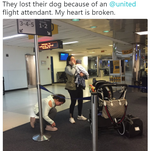 Puppy dies after United flight attendant forced it into an overhead bin