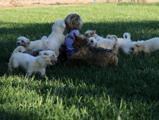 A child sits with puppies at a breeding farm in Odon,
