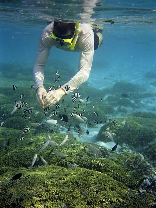 underwater-sea life