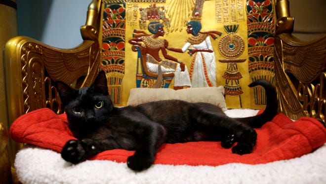In this Thursday, Dec. 18, 2014 photo, a cat rests on the throne bed in the King Tut-theme cat playroom at the Oregon Humane Society in Portland, Ore. Modern-day cats have not yet become associated with deities as they were in ancient Egypt, but the Internet has gotten them a little closer.