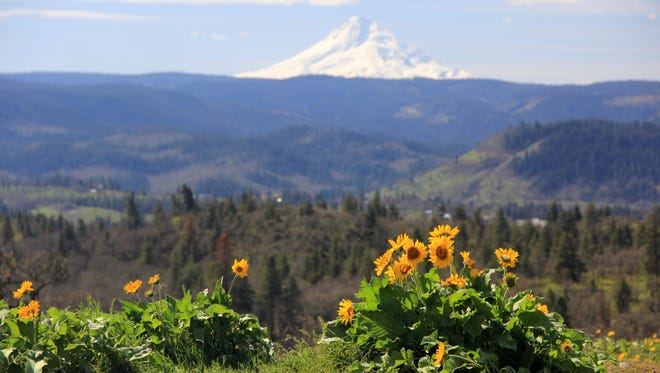 A hike up the unmarked trail at Memaloose Viewpoint takes visitors among thick wildflower blooms at the top of Marsh Hill.