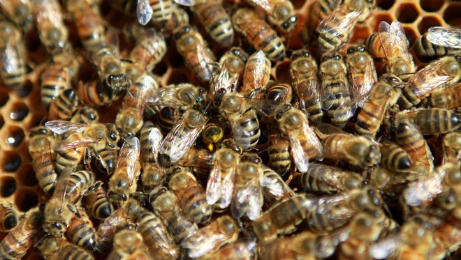 Iowa bees swarm on their hive.
