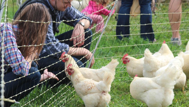 Some Village of Mamaroneck residents want the village board to allow them to raise backyard chickens.