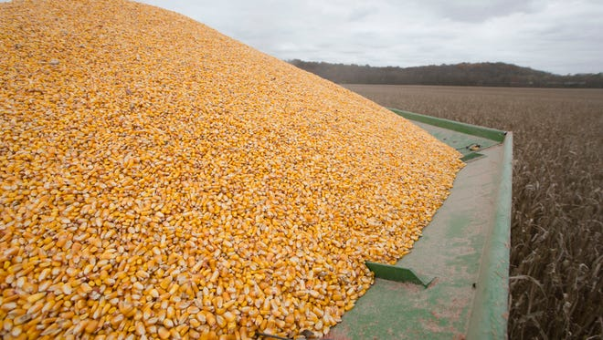 A mound of corn sits atop a combine during the late harvest at Knollman Farm on Oct. 30  in Hamilton, Ohio. Excellent rains and temperature conditions throughout the growing season contributed to bumper crops in parts of southern Ohio.