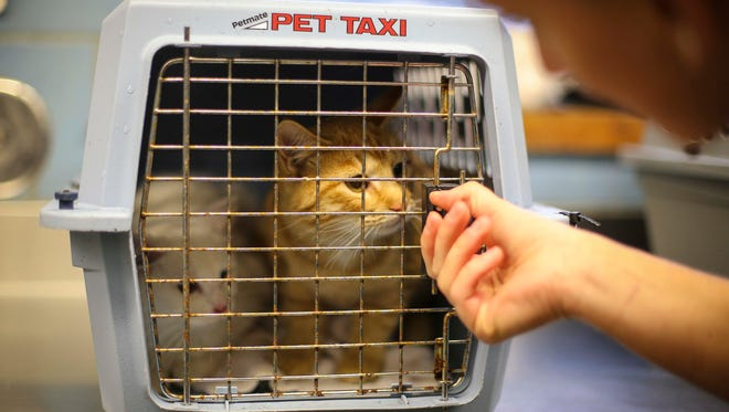 Animal control officer Devon Strief drops off cats from the north side of Des Moines, Iowa, on Monday, Nov. 16, 2015, at the Animal Care and Control Center on Southeast 14th Street.