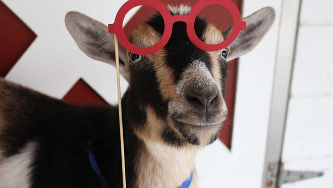 There will be a petting zoo at the Lee County 4-H Old Fashioned FunDay at Veterans Park on Jan. 23.