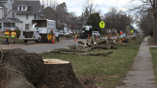 Employees of Sumner Tree Service remove some of the 17 trees expected to be removed along Highway 146 north of the intersection with U.S. Highway 6. The trees are being taken down now to avoid disturbing bats - a protected species -- during road construction which is expected to start April - May 2016.