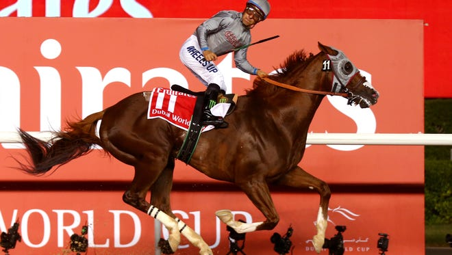 DUBAI, UNITED ARAB EMIRATES - MARCH 26:  Victor Espinoza rides California Chrome to victory in the Dubai World Cup Sponsored By Emirates Airline as part of the Dubai World Cup at Meydan Racecourse on March 26, 2016 in Dubai, United Arab Emirates.