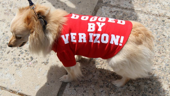 "Bruno, owned by Sheri Kallatch of Trevose, Pennsylvania, wears a ""Dogged by Verizon"" shirt as Verizon and unions striking hold a rally in front of the State House in Trenton, NJ Monday, April 25, 2016."