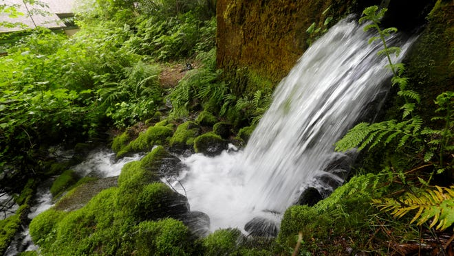 In this Thursday, May 5, 2016 photo, spring water from Little Herman Creek pours out of the hillside from in Cascade Locks, Ore.
