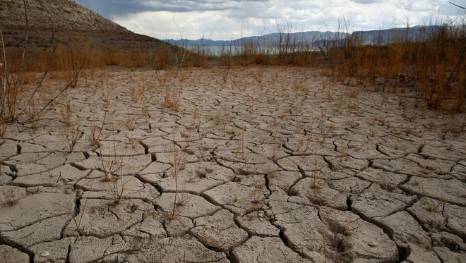 Plants grow out of dry cracked ground that was once underwater near Boulder Beach in the Lake Mead National Recreation Area, Monday, May 18, 2015, near Boulder City, Nev. Parts of the Southwestern U.S. have endured a fifth consecutive year of drought. While these areas and the country are far from being drought free, near record-strength El Niño rains over the winter and fall of last year alleviated drought conditions considerably.