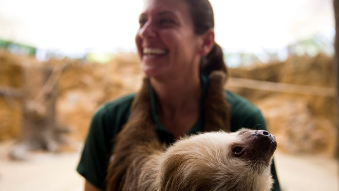 Molly, a two-toed sloth, hangs onto Julie Bragovich, the Naples Zoo Animal Care Supervisor of Shows, while she is shown to zoo visitors during the Safari Canyon Feature Show Thursday, July 7, 2016 in Naples, Fla. (Luke Franke/Naples Daily News)
