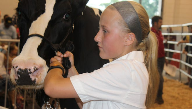Emily Stumpf leads her 3-year-old cow Nordic Ridge G-Chip Mint during the 2016 Quality Milk Auction at the Fond du Lac County Fair July 22. All bids helped support the efforts of local dairy youths.