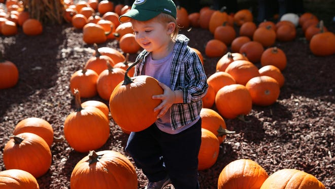 Harris Nickerson, 2, of Elm Grove looks for just the right pumpkin to take home at the Harvest Fair at Wisconsin State Fair Park in this 2014 photo.
