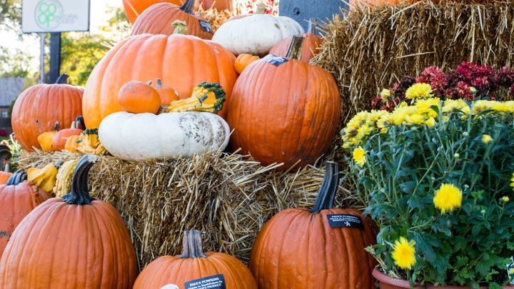 The Co-op to hold Harvest Fest on Saturday
