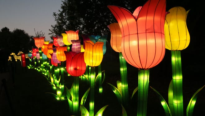 Tulips light the way at the China Lights display at Boerner Botanical Gardens.