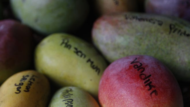 A selection of mangos have their varieties written on them at Fruitscapes Tropical Fruit Market on Pine Island.