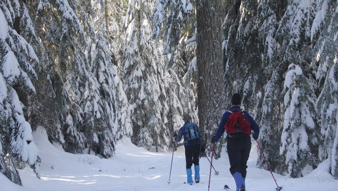 Jim Todd and Jeff Starr of the Willamette Chapter Oregon Nordic Club ski among big trees near Big Springs Sno-Park  on Dec. 28, 2016.